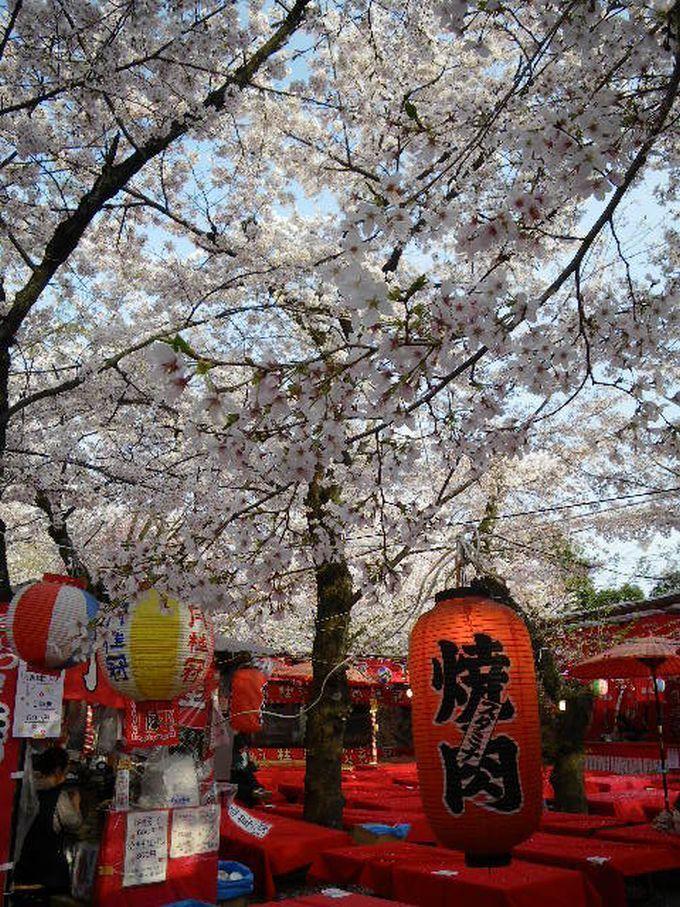 平野神社_SHIZUKO